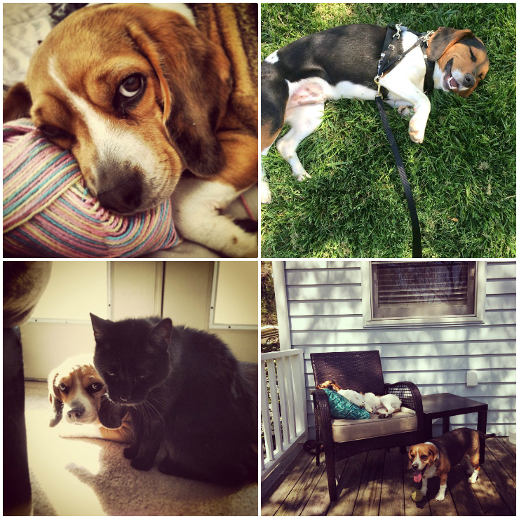 Pets Collage_about